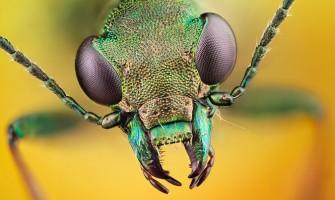 Използване на биоциди при борба с инсекти